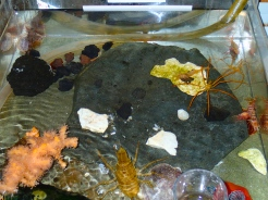 Crary's touch tank.