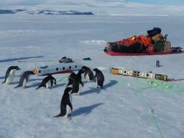 Curious Adelie penguins. Photo credit: grantee event B-174