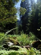 The Cascade Mtns. of Washington.