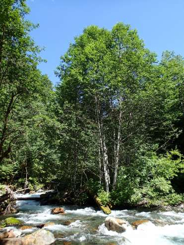 Burntboot Creek, in the Cascade Mtns. of Washington.