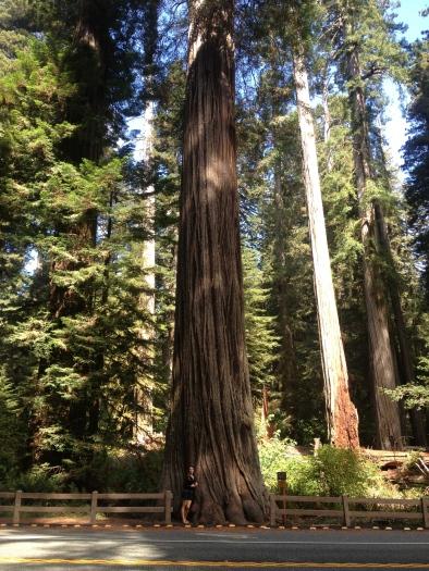 Redwoods, California.