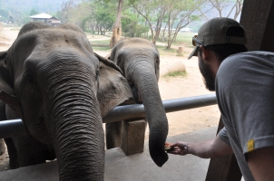 Feeding the elephants fruit. Elephant Nature Park, Thailand.