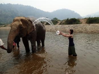 Bathing the elephants at Elephant Nature Park, Thailand.