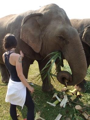 Elephant Nature Park, Thailand.
