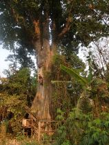 Abseiling a tree in Thailand.