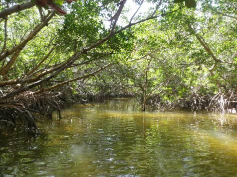 Kayaking through the mangroves in the Keys.