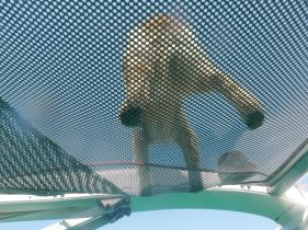 View of the mascot from beneath.