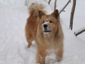 The powder hound.