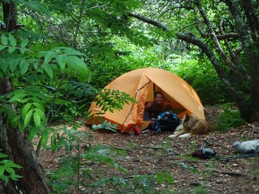 Camping in the Shining Rock Wilderness National Forest.