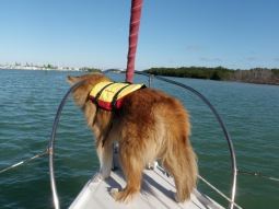 Dolphin spotter.