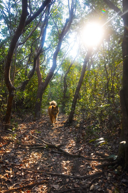 A trail in the Bahamas on a remote island we sailed to.